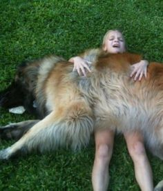15 Big Dogs That Don't Know Their Size | PawNation