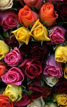 Perfect Rose's!