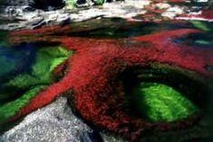 Caño Cristales, en el departamento del Meta, es una de las maravillas naturales que ofrece nuestro país. Esta es otra respuesta que Colombia le ofrece a los turistas que buscan nuevas experiencias.