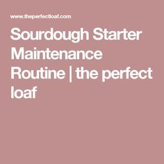 Sourdough Starter Maintenance Routine | the perfect loaf