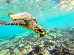 Snorkeling at Maldives