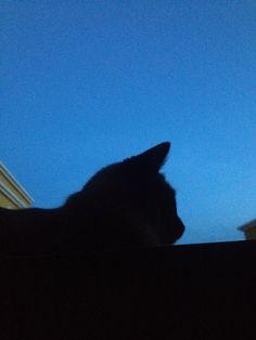 Gato na janela e o céu azul