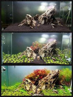 "What an abundance of colours in this tank!""Reborn"" by Coffman, via Aqua Design Innovations"
