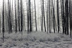 Park, Forest Frost Trees Winter Morning Nature L West Glacier, Glacier National Park Montana, Yellowstone National Park, National Parks, Skinny Tree, Winter Wallpaper, Winter Images, Beautiful Park, Habitats