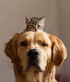 cani-e-gatti-che-vanno-in-accordo-33