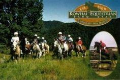 Scenic horse trekking at Kowhai Farm in New Zealand.