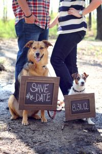 Save the Date | Chalkboard and Pets