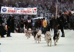 dog sled races, saranac lake, jan 1979