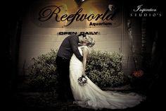 brisbane wedding photography Elegant Wedding, Wedding Day, Wedding Photography Inspiration, Photography Ideas, Brisbane, Wedding Styles, Wedding Planning, Wedding Dresses, Studios