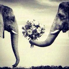Che vita #romantica e profumata