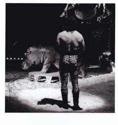 Circus.  Wendy Lorimer.