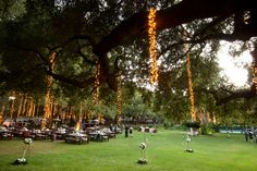 I like the lights hanging from the trees. I pretty much just like lights everywhere.