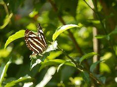coorg rainforest