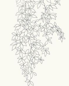 how to draw a jungle vine