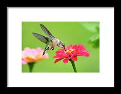 Waiting In The Wings Framed Print by Christina Rollo.  All framed prints are professionally printed, framed, assembled, and shipped within 3 - 4 business days and delivered ready-to-hang on your wall. Choose from multiple print sizes and hundreds of frame and mat options.