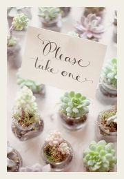 Wedding Reception Ideas For Guests Bridal Musings Ideas For 2019 Succulent Wedding Favors, Unique Wedding Favors, Wedding Flowers, Wedding Decorations, Wedding Day, Wedding Blog, Chic Wedding, Succulent Gifts, Perfect Wedding