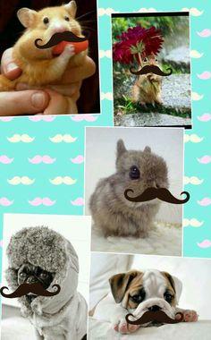 Mustache animals