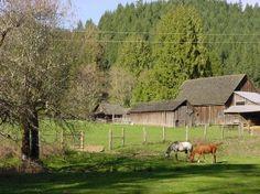 Starting a Farm Stay Deer Farm, Starting A Farm, Farm Stay, Farm Barn, Small Farm, Farm Life, Homesteading, House Styles, Barns