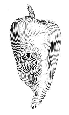 Illustration - Jessica Terrill