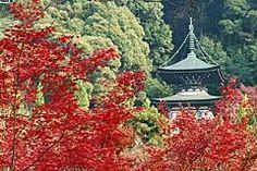 奈良公園の紅葉情報 | 紅葉名所2015 - Walkerplus