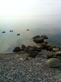 lakefront ducks @ Padenghe sul Garda