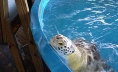 South Padre Island Sea Turtle Rescue You'll never get closer to a Sea Turtle Photo by Texas Dave