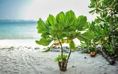 Plant Leaves, Places, Lugares