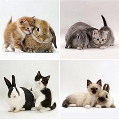 Adorable kittens and their rabbit counterparts very beautiful http://ift.tt/2dk33Di