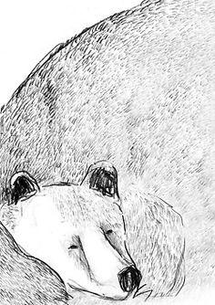 #draw#illu#bear