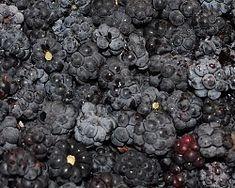 Blueberry, Fruit, Food, Pictures, Photos, Berry, Essen, Meals, Yemek