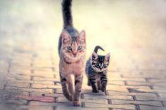 On the catwalk.
