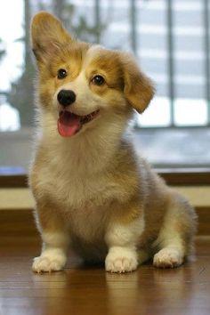 22 Hunde, die Dich wieder zum Lachen bringen, egal wie mies Dein Tag war