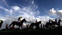 horses at wexford Horse Racing Tips, Racing News, Racehorse, Thoroughbred, Champion, Horses, World, Places, The World