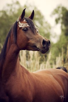 horses are the most beautiful