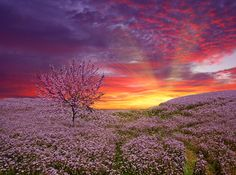 Pink Clouds sunset | Sunset Tree Awesome Pink Clouds Birds Wallpaper Nature Pictures
