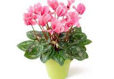 Houseplants, Greenery, Velvet, Gardening, Agriculture, Gardens, Plant, Indoor House Plants, Lawn And Garden