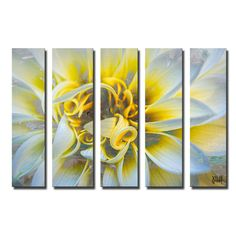 Painted Petals XXXVII by Alexis Bueno 5 Piece Graphic Art on Wrapped Canvas Set
