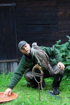 Czech-Falconry-Birds-Hunting-Bohemian-Photo-44