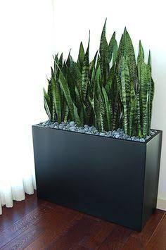 Resultado de imagen para minimalist large vessel plant arrangements #plantasdecorativas #Plantasdecoracion