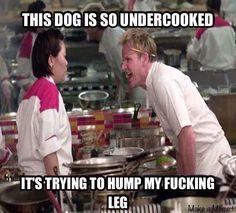 Gordon Ramsay - Undercooked Dog