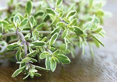 Citronový tymián také tvoří keříky a pěstuje se stejně jako tymián obecný. Nordic Interior, Korn, Planting Flowers, Gardening, Health, Raw Materials, Herbs, Wellness, Plants