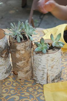 Centerpieces created for Karina's Shower, holes bored out of birch firewood from Home Depot with succulents planted inside