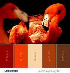 Color Palette Ideas from Flamingo Beak Vertebrate Image Color Combinations, Color Schemes, Orange Color Palettes, Vertebrates, Color Pallets, Color Inspiration, Flamingo, Sewing, Image