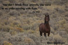 horse quotes - Google Search