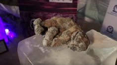 "A South Korean researcher, who was once declared a ""supreme scientist"" has assumed the task of bringing Ice Age lions back to life, by using DNA from two 12,000 year old cubs which have been found phenomenally well-preserved in Siberia. The frozen animals, nicknamed Uyan and Dina after the river where they were uncovered, date back thousands of years. They were located by a group of researchers who had originally been looking for mammoth tusks in Yakutia, eastern Russia, late last year…"