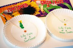 Lifecycle Paper Plates