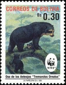 Spectacled Bear (Tremarctos ornatus)