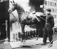 On HorseNation: 15 Historic Horse Photos That Are Worth 1000 Words! Seen here: A man demonstrates the first horse vacuum cleaner on a stuffed horse at Berlin's Green Week in 1928.