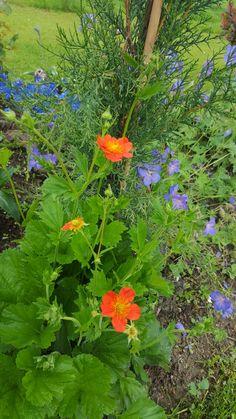 La fleurs orange a mario