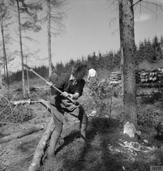 A member of the Timber Corps strikes a tree with an axe during training at the Women's Land Army training camp at Culford, Suffolk, in 1943 ~ Women's Land Army, Army Training, Female Farmer, Lumberjack Party, Land Girls, Green Beret, Outlander Book, Female Soldier, World War One